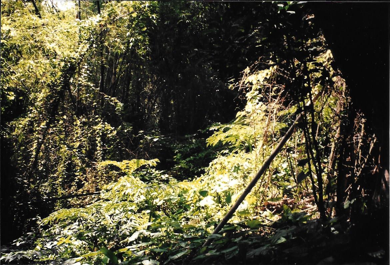 Jungle in Alitagtag